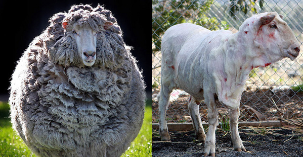 lana etica