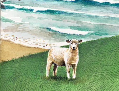 Reto Hilandia. Reto Solidario El mayor rebaño virtual de ovejas