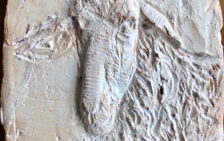 Maruja Reto Hilandia